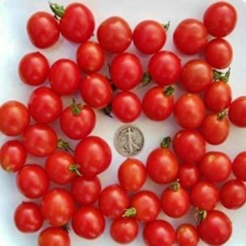 Fash Lady Riesentraube - Bio Heirloom Tomaten Samen - Deutsche Kirsche - 40 Samen