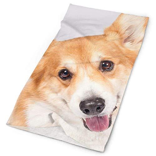 jingqi Cute Smile Welsh Corgi Dog Headband Bandana£¬Outdoor Multifunctional Headwear,Magic Scarf for Men Women 19.7x9.85inch(50x25cm)