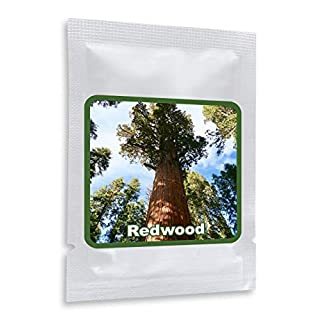 Giant Redwood 25 Seeds - A living monument (Sequoiadendron gigantea) - UK Hardy