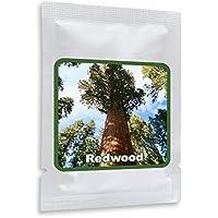 Sequioa gigante 25 semillas/cultivable como árbol o bonsái/Un monumento viviente