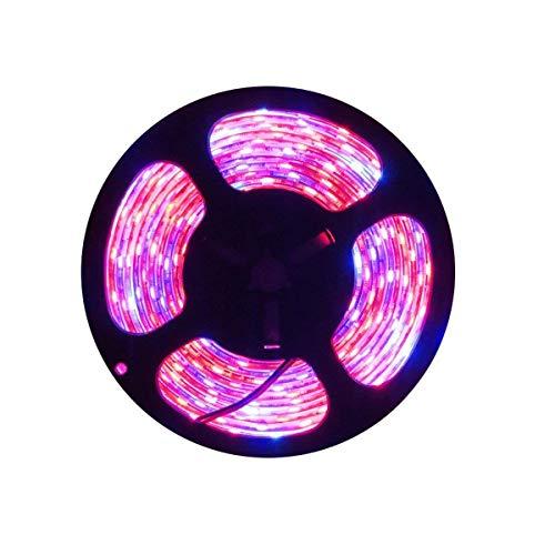 Tesfish LED planta crecer tira luz DC 12V IP65 espectro completo SMD 5050 rojo azul 8: 1 cuerda luz para acuario Invernadero plantas