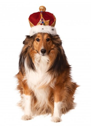 Rubies King's Crown Haustierkostüm-Zubehör, Small/Medium, Mehrfarbig (Kings Crown Kostüm)