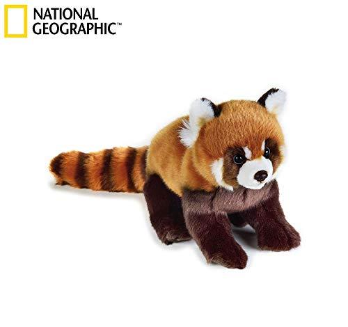 National Géographic  - 770716 - Panda Roux