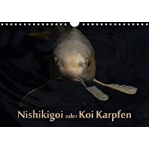 """Nishikigoi oder Koi Karpfen (Wandkalender 2018 DIN A4 quer): Nishikigoi oder einfacher """"Koi"""". Ein Fisch in seinem Lebensraum. (Monatskalender, 14 ... [Kalender] [Apr 01, 2017] Renken, Erwin"""