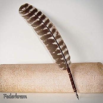 Schreibfeder Truthahn, Federkiel, Vogel, Stift, Kalligraphie