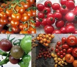 48 Sorten von köstlichen Früchten. 200PC verschiedene Aromen von Tomaten-Samen, wachsen einfach gemischte Verpackungen