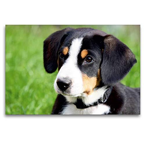 Premium Textil-Leinwand 120 x 80 cm Quer-Format Entlebucher Sennenhund | Wandbild, HD-Bild auf Keilrahmen, Fertigbild auf hochwertigem Vlies, Leinwanddruck von SchnelleWelten