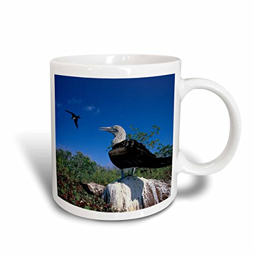 3dRose Galapagos-Inseln, Blue-Footed boobie-sa07Bereist pso0005-paul Souders Becher, Keramik, weiß, 10,16x 7,62x 9,52cm Blue Footed Mug