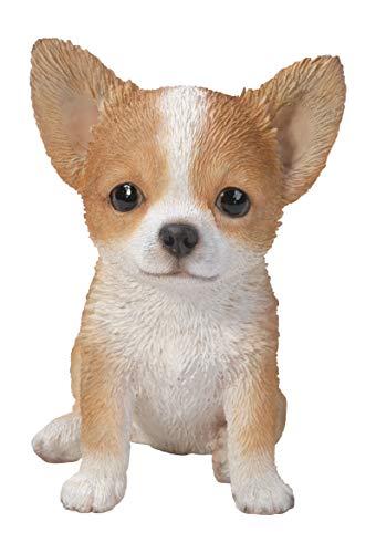 Vivid Arts PP-HUAH-F Chihuahua-Welpe, Braun / Weiß
