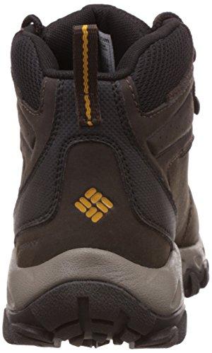 Columbia Newton Ridge Plus Ii Waterproof, Chaussures de Randonnée Basses Homme Multicolore - Multicolor (Cordovan/Squash)
