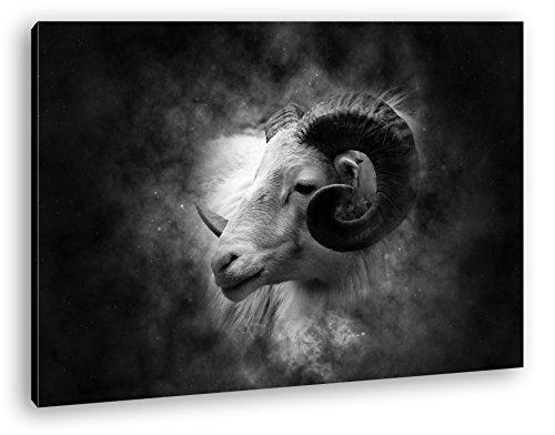 Bezaubernder Widderkopf Effekt: Schwarz/Weiß im Format: 120x80 als Leinwandbild, Motiv fertig gerahmt auf Echtholzrahmen, Hochwertiger Digitaldruck...