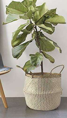 7WUNDERBAR Seegras Korb Blumentopf Stroh Blumenkorb Wäschekorb faltbar Aufbewahrungskorb groß mit Griff für Kinderzimmer Badezimmer (C#38CM * 34CM)