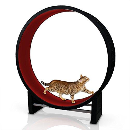 CanadianCat Company | Katzenlaufrad Cat in Motion Rot - Trainingsgerät und Spielzeug für Katzen