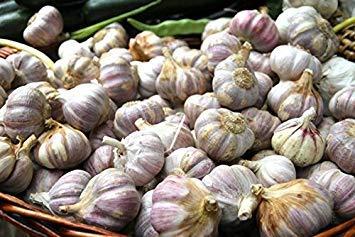 Idée High Live Seeds - 30 gousses d'ail, graines « Lautrec Wight » Hardy Bulb (Planter Maintenant) à partir de 3 Ampoules