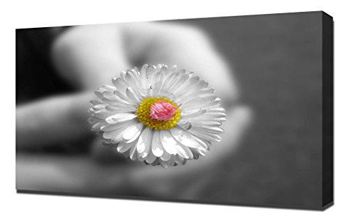 pingoo Prints Daisy Blumen Bouquet Print/Art Wand Wrap, Leinwand, mehrfarbig, 60x 90x 5cm - Daisy Bouquet Wand