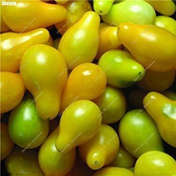 VISTARIC 100pcs / pack de rares ronde concombre jaune Graines délicieux concombre bio fruits et semences potagÚres pour jardin Plantes Bonsai Graines Concombre