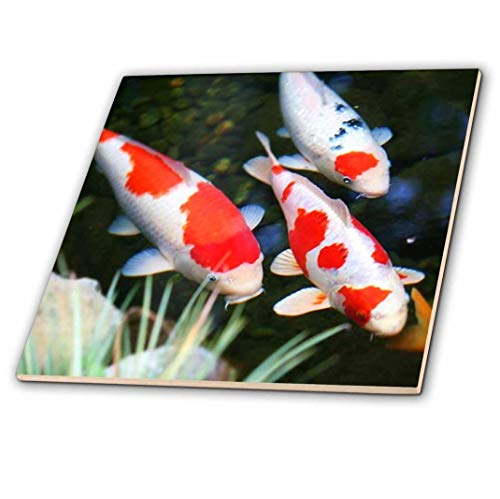 3dRose Japanische orange N weiß Koi Fisch–Glass Tile, 6(CT 62378Salatschüssel 6)