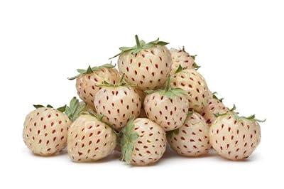 Weisse Ananas Erdbeere Pineberry 100 Samen HOHER ERTRAG von exoticsamen Samenraritäten aus aller Welt auf Du und dein Garten