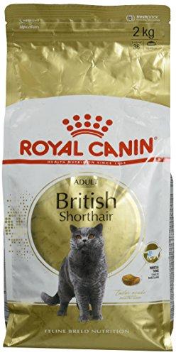 Royal Canin Feline British Shorthair, 1er Pack (1 x 2 kg Beutel) - British Kurzhaar Katzenfutter