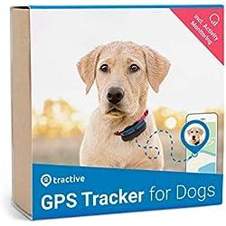 Tractive Edition 2019 GPS Tracker für Hunde mit Aktivitätstracking - Leichter und wasserfester Peilsender mit Echtzeit GPS-Ortung