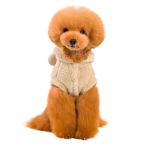 Obestseller-Haustier-Kleidung-Haustier-Katze-Welpe-Warme-Winter-Baumwolle-Kleidung-Cartoon-Br-Zweibeinige-Kleidung-Haustier-Hunde-Wintermantel
