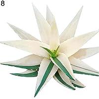 quanjucheer 100Pcs Rare Aloe Vera Succulent Plant Perennial Anti-Radiation Home Garden Seeds Wonderful Gardening Gifts