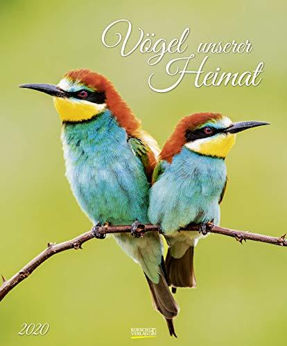 Vögel unserer Heimat 2020: Wandkalender groß. Fotokunst-Kalender mit Bildern von Vögeln in der heimischen Natur. 45,5 x 55 cm