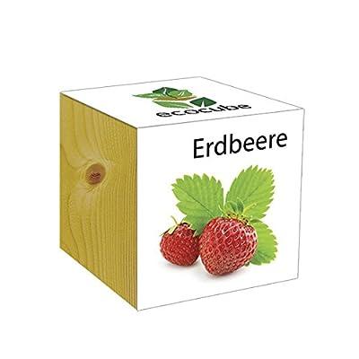 ecocube Holzwürfel - Erdbeere von Inventive Trading - Du und dein Garten