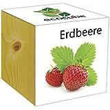 Extragifts ecocube Fragola - piante nel cubo di legno
