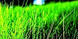 500 sq. ft. : Nature's Seed Fine Fescue Grass Seeds Blend, 500 sq