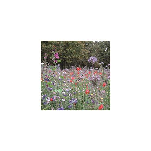 Les Gazons de France Mélange Prairie Fleurie Mellifère