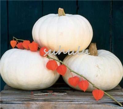 30 PC/bag Kürbiskerne, Halloween-Kürbis leckeres Bio-Samen Gemüse für zu Hause Gartenkürbis Dekoration im Freien s