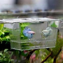 Slb Works Aquarium Fish Tank Guppy Double Breeding Breeder Rearing Trap Box Hatchery New
