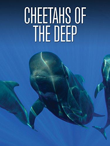 Cheetahs of the Deep [OV] (Diva Cheetah)