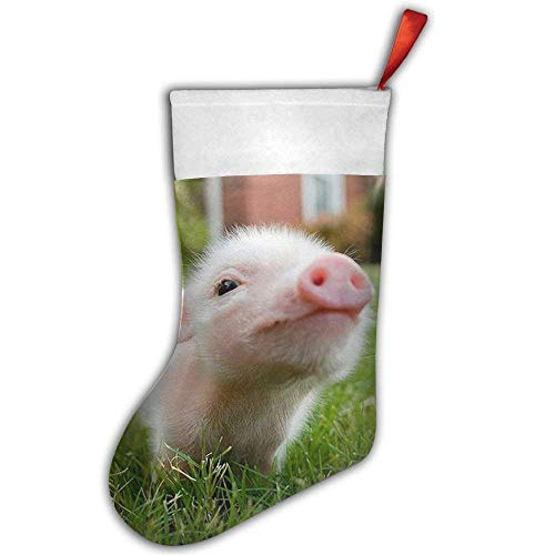 by Pig Piglet Closeup in Grass Christmas Stocking,Craft Holiday Hanging Socks Ornaments Decorations Santa Stockings 50CM ()