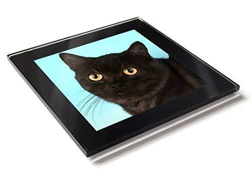 Europäisch Kurze Haare Schwarzer Rauch Katze Kätzchen Premium Glastisch Untersetzer mit Geschenkverpackung