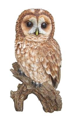 Vivid Arts Real Life Tawny Owl (Size B)