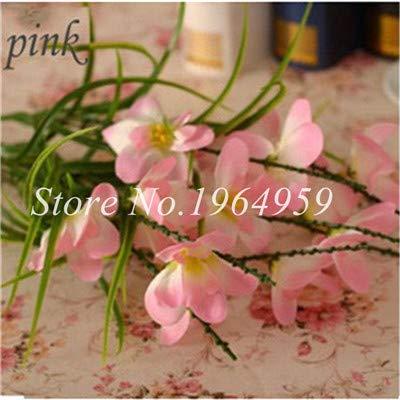Shopmeeko Graines: Vase spécial coloré Bonsai Fleur Freesia Bonsai Décor rare orchidée Illuminez votre jardin personnel Bonsai 100 Pcs/Sac: 16
