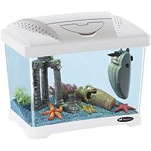 Acquario piccolo for Pesci per acquario piccolo