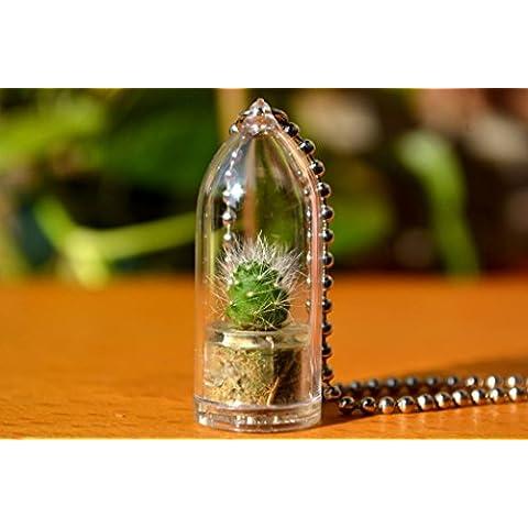 Snow White–Cactus Live Planta collar. terrario Collar Collar De Regalo De., diseño de flor