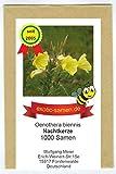 Gemeine Nachtkerze - Heilpflanze - essbar - Insektenmagnet - 1000 Samen