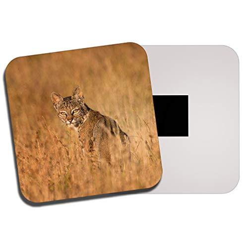 Ziel Vinyl Ltd Bobcat Lynx Kühlschrankmagnet - Big Cat Wildtier Amerika Rockies 14241 Rocky Lynx