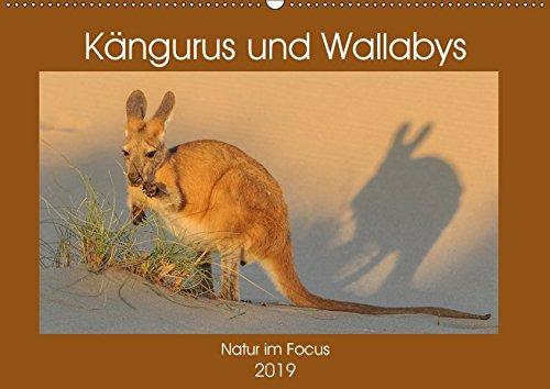 Kängururs und Wallabys (Wandkalender 2019 DIN A2 quer): Das Känguru ist Nationalsymbol bzw. auch Wappentier von Australien und vermutlich das ... (Monatskalender, 14 Seiten ) (CALVENDO Tiere)