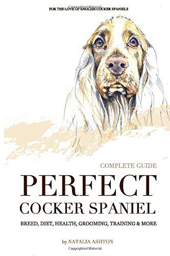 Perfect cocker spaniel: complete guide. Breed, diet, health, grooming, training and more