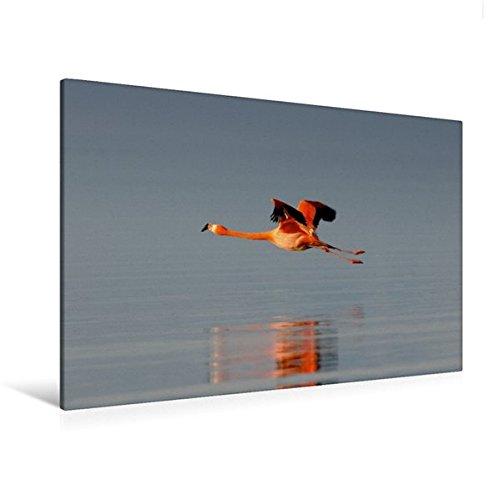 Toile en Tissu de qualité supérieure 120 cm x 80 cm – Flamingo dans Le Cadre – Image sur Toile – Impression sur Toile sur Toile par  Calvendo