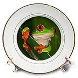 3dRose CP 83654_ 1red-Eyed Baum Frosch (Rotaugenlaubfrosch) -na02aje0384-adam Jones-Porcelain Teller, 20,3cm