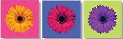 Bright Gerbera Flower Set of 3 Outdoor Canvas Garden Wall Art Picture