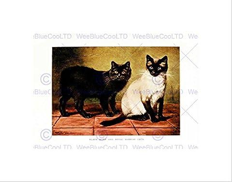 PAINTING ANIMAL SIMPSON BLACK MANX ROYAL SIAMESE CAT FRAMED ART PRINT B12X12832