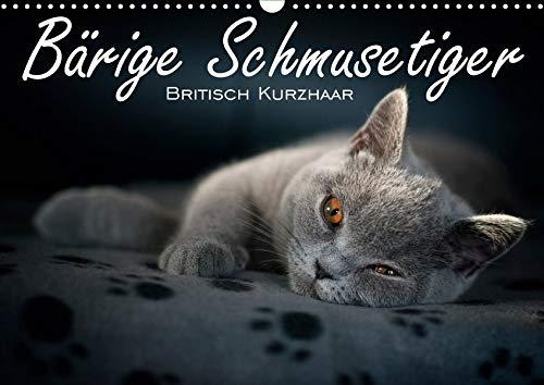 Bärige Schmusetiger - Britisch Kurzhaar / CH-Version (Wandkalender 2020 DIN A3 quer): Liebevolle Fotoserie von Britisch Kurzhaar Kätzchen (Monatskalender, 14 Seiten ) (CALVENDO Tiere) -