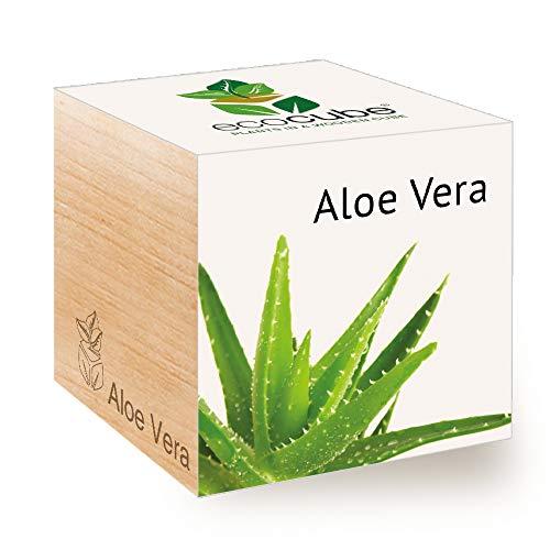 feel green ecocube aloe vera exotics- kit per coltivare il proprio regalo, sostenibile e insolito (100% ecologico), pianta in un cubo di legno, made in austria, nylon/a.